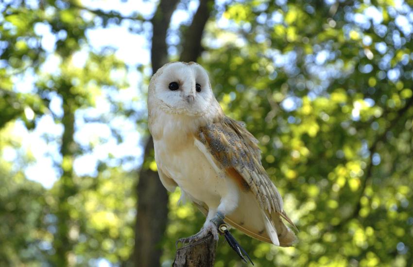 Secret Owl Garden, Picton Castle
