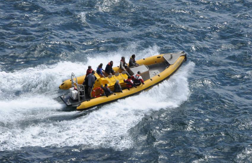 Sea safari from Brunel Quay