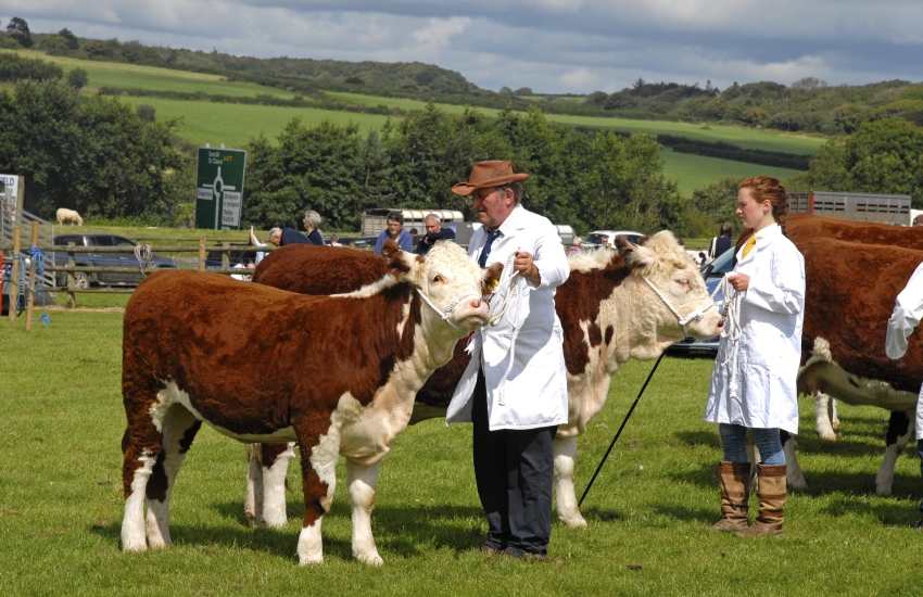 Martletwy Show which takes place at the end of August