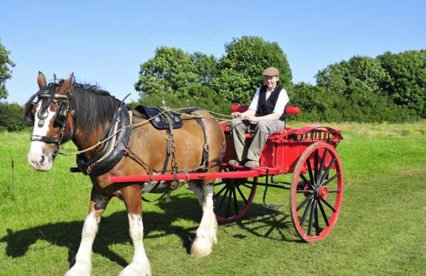 Dyfed Shire Horse Farm offers a good family day out. Meet the farm animals, play crazy golf, enjoy indoor/outdoor play areas or experience a leisurely horse and cart ride!
