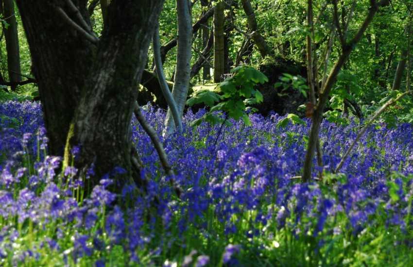 Explore Upton Castle's woodland trails, bluebell  walk