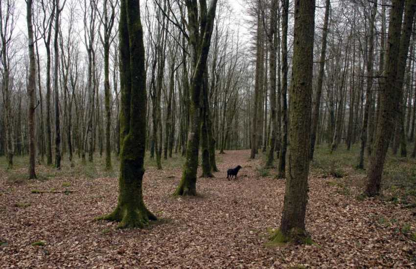 Walks in the nearby ancient woods of Minwear are a joy at any time of the year