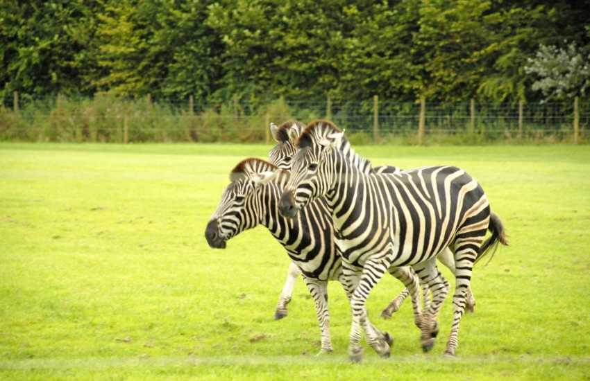 Folly Farm Adventure Park and Zoo has a wide variety of animals that will keep you entertained all day!