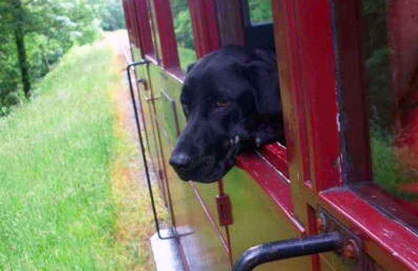 Teifi Valley Railway - a narrow-gauge tourist railway at nearby Henllan welcomes well behaved dogs on the train for just 1 pound !
