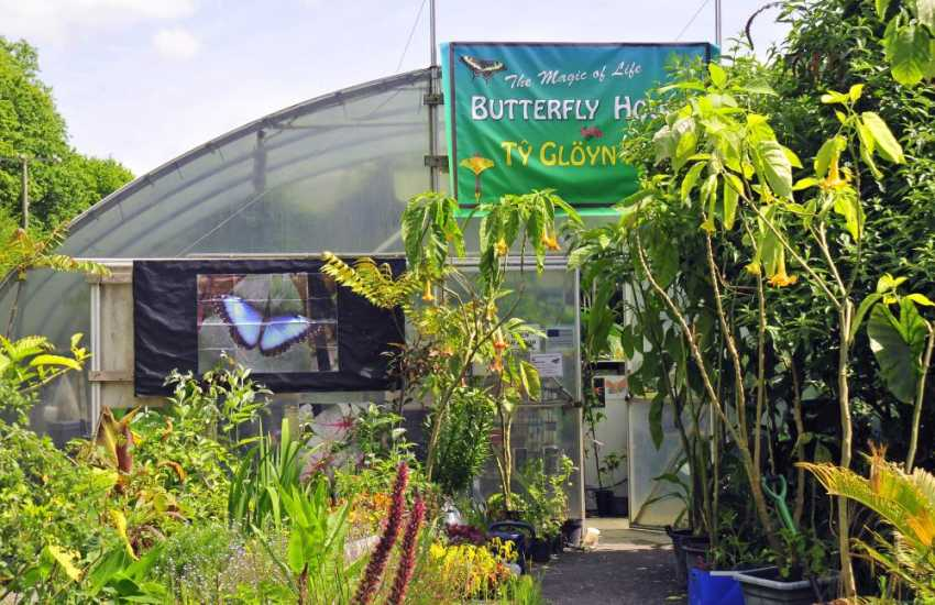 The colourful Butterfly House at Cwm Rheidol