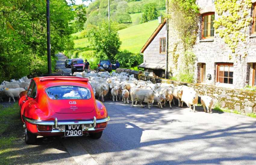 Drive inland through the rolling Aeron Valley with lush green pastureland to Lampeter, a timeless university  town with a variety of shops, cafes, pubs and restaurants to choose from