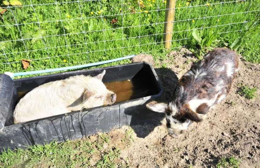 Owners pets cooling down in the hot weather