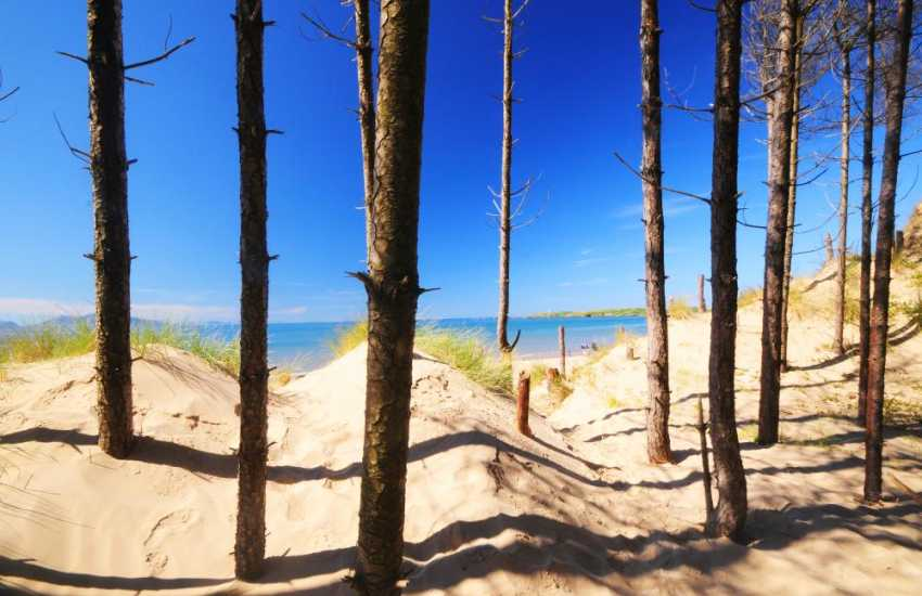 Newborough beach fringed with forest. The long stretch of sandy beach leads to Llanddwyn island