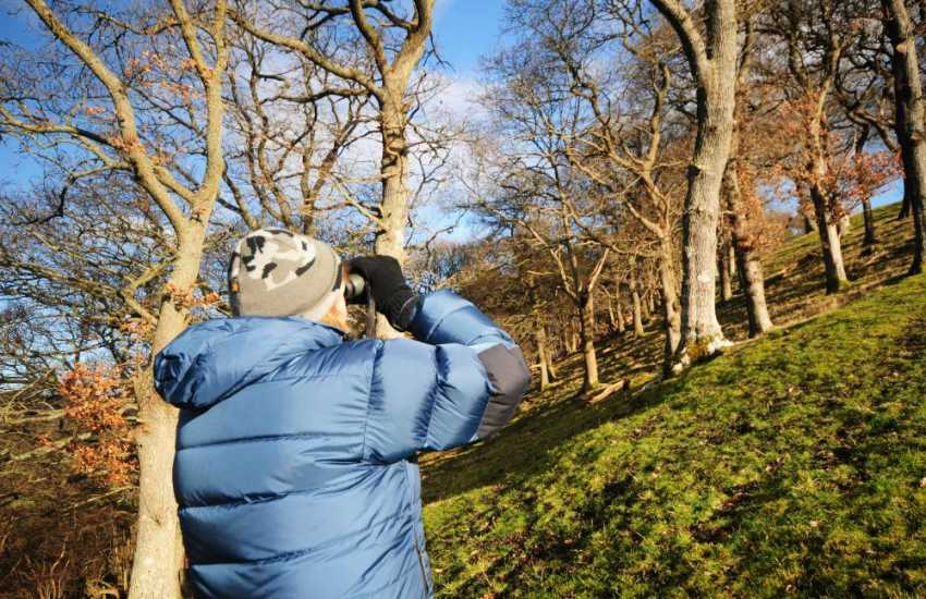 Birdwatching in Snowdonia