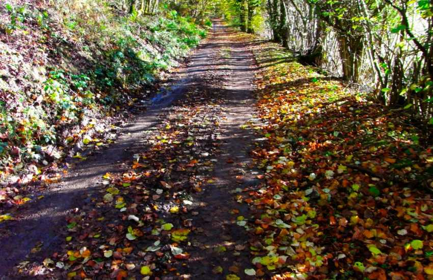 Walk into the lanes and footpaths nearby - a myriad of colour in the autumn