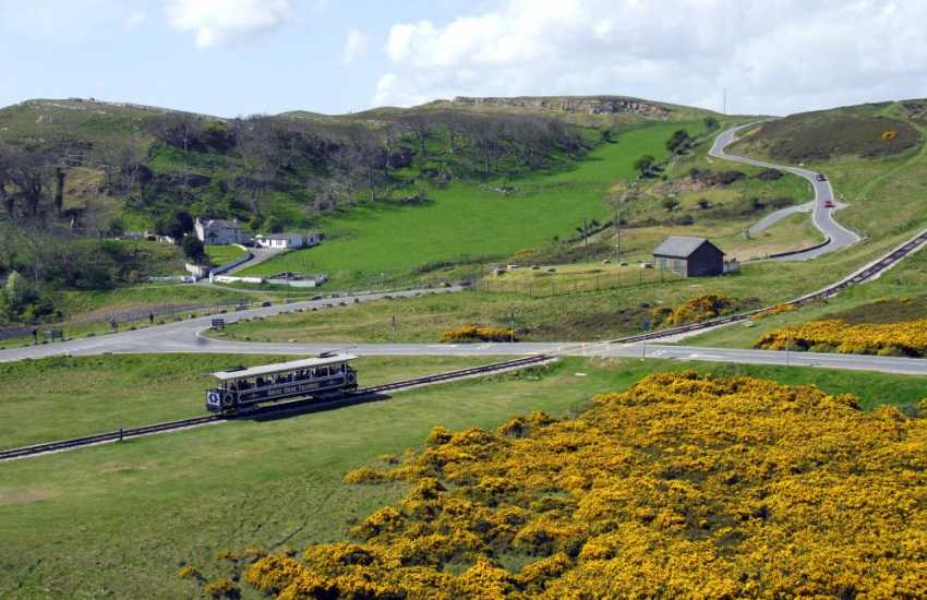 Do take the tram to the top of the Great Orme where the cliffs are host to seabirds such as Razorbills, Guillemots, Kittiwakes and many more