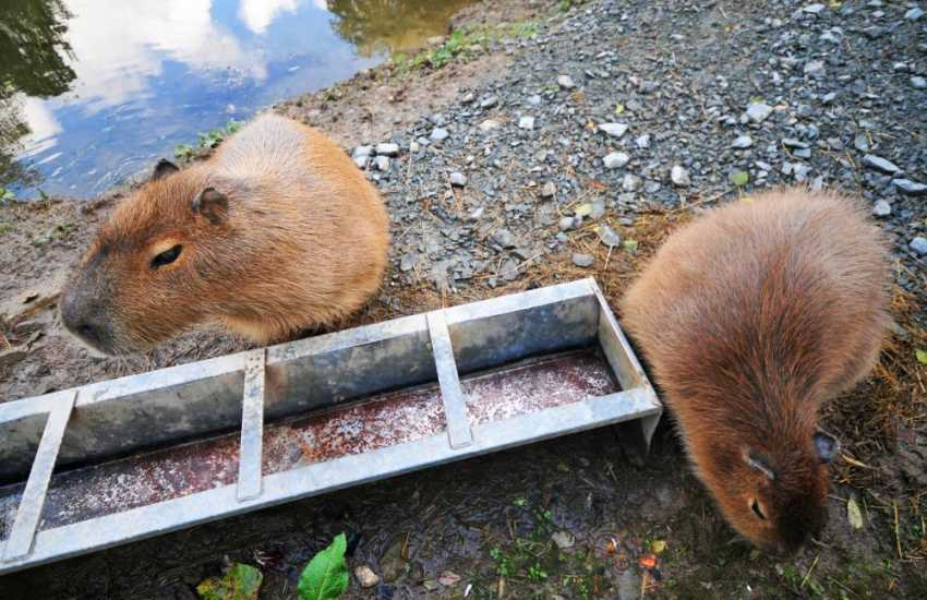 Conwy Water Gardens, woodland nature trails, Otters,  Capybaras, fishing lakes and a Pancake house