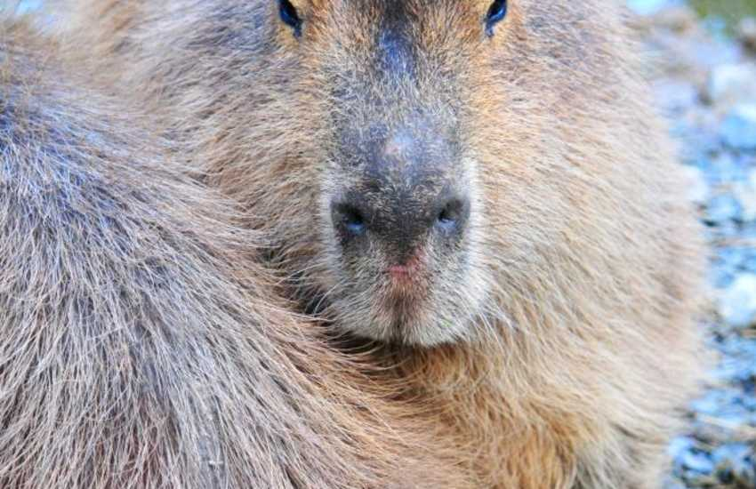 Otters and Capybaras, a Dutch Pancake House and fishing, a great visitor attraction, with free entry, just outside Conwy