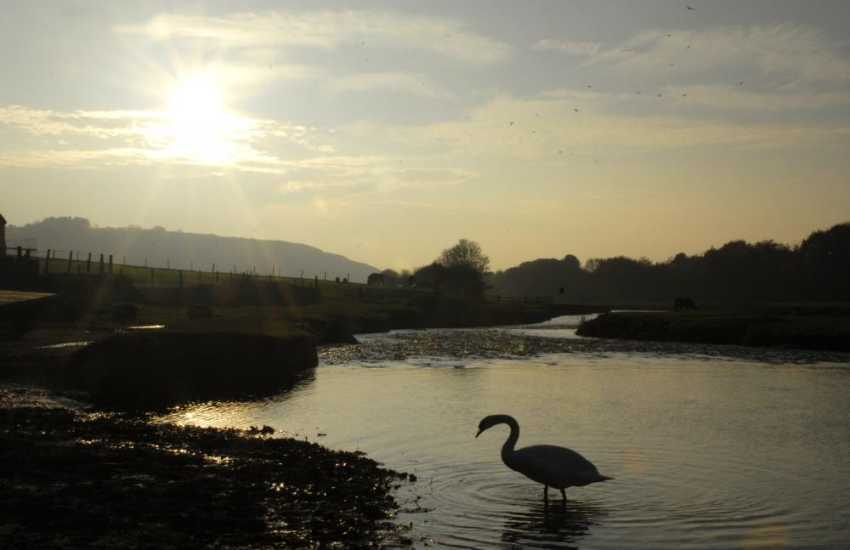 Swans, Egrets, Herons and Kingfishers are just some of the abundant wildlife to be spotted along the banks of the Ewenny River