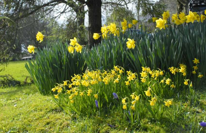 Spring at Dyffryn Gardens (National Trust) - a Grade I Edwardian garden and Arboretum spread over 55 acres, open all year round and dogs welcome on leads