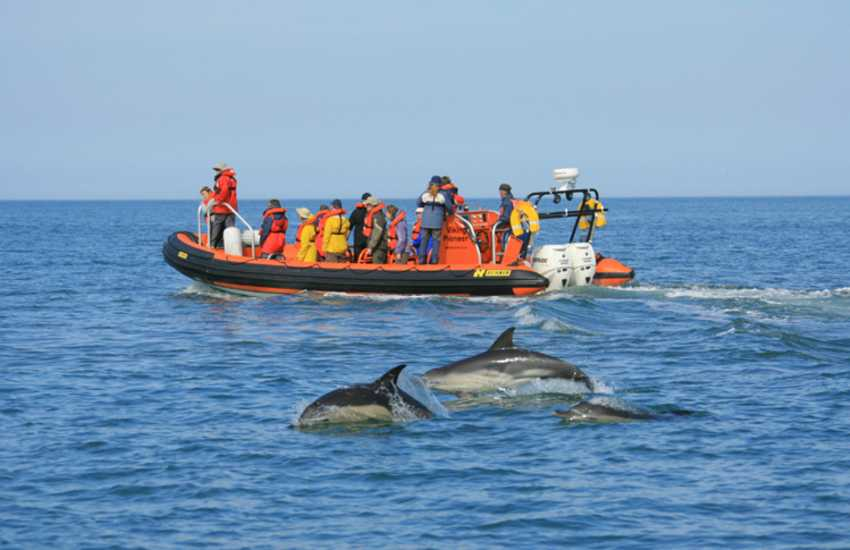 Cardigan Bay is home to resident Bottlenose Dolphins - do book a boat trip with 'A Bay to Remember' who run trips throughout the summer from The Patch in Gwbert