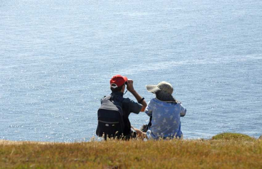 The Pembrokeshire Coastal Path is a bird watchers paradise - don's forget your binoculars