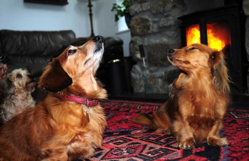 Pet friendly holiday house North Wales - dogs