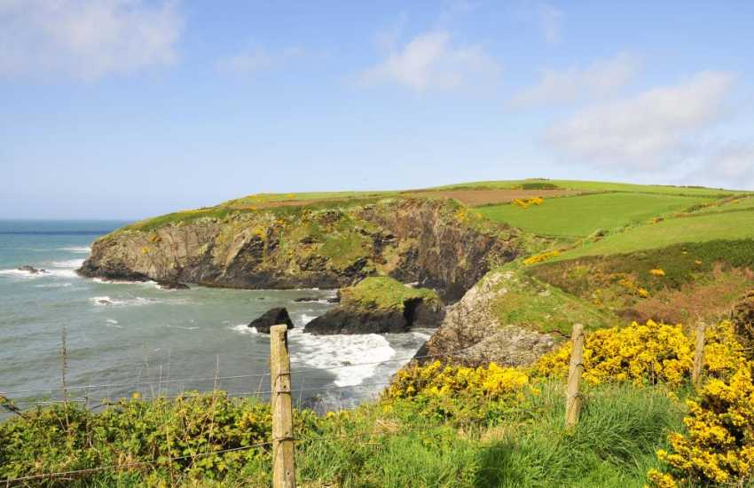 Enjoy walking the Pembrokeshire Coast Path for stunning cliff top scenery, flora and fauna