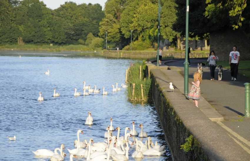 The mill pond in Pembroke - a quiet place to watch swans, herons, ducks and other water birds