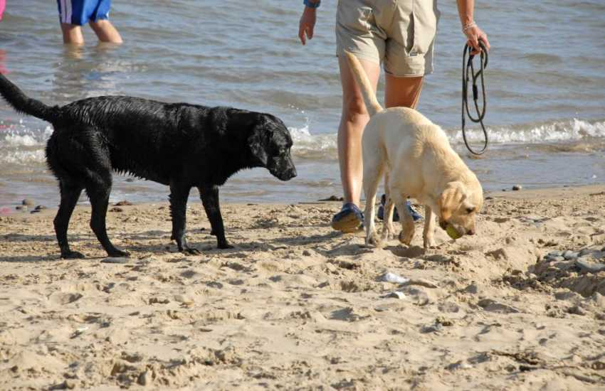 Most 'Quality Cottages' welcome pets - enjoying the waves together!