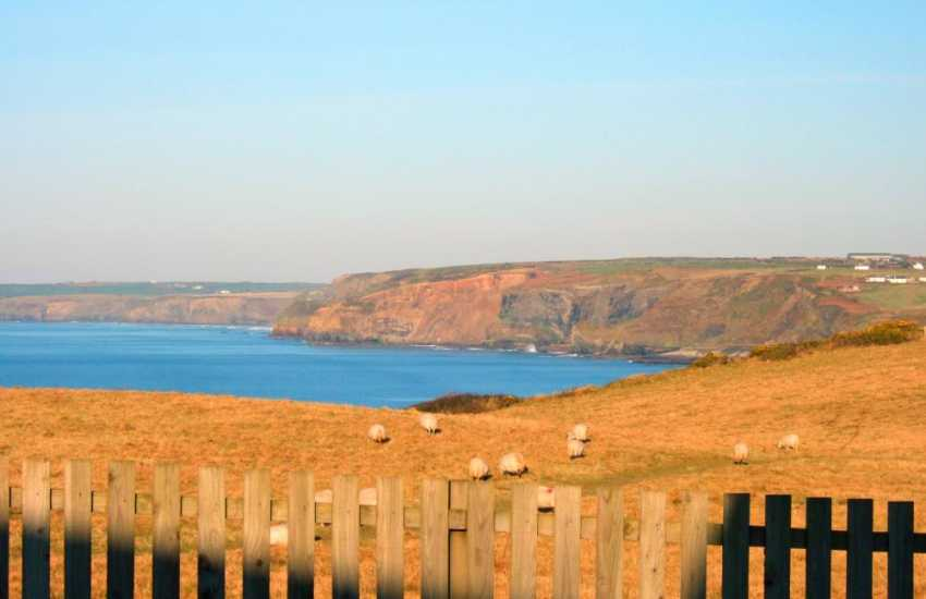 Beautiful evening sun over the Pembrokeshire Coast Path from Hafen Mor