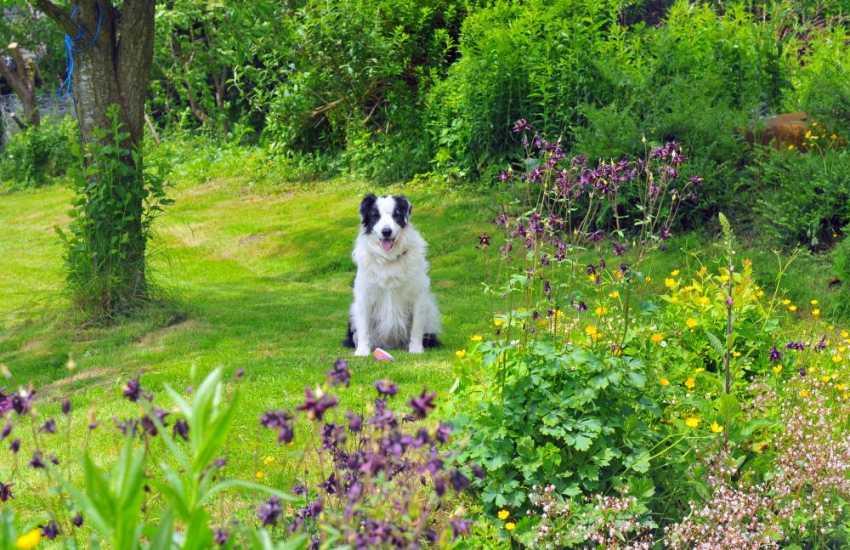 Knighton holiday cottage - dog