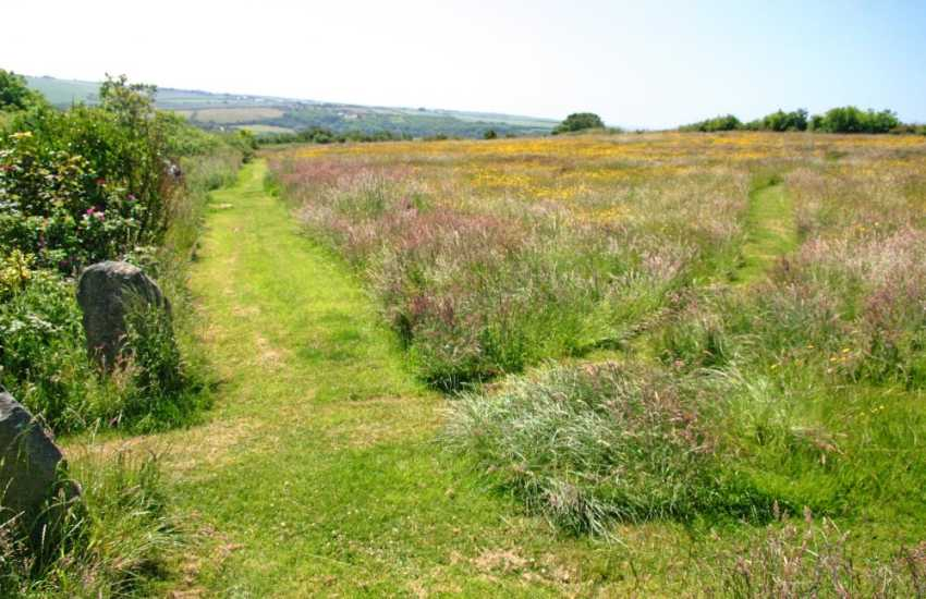 Walk the dogs through the paths in the lovely wild flower meadow by the old farmhouse