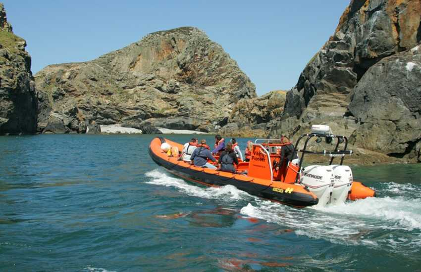 Take an exhilarating boat trip and explore the rugged Pembrokeshire Coast with its abundant wildlife