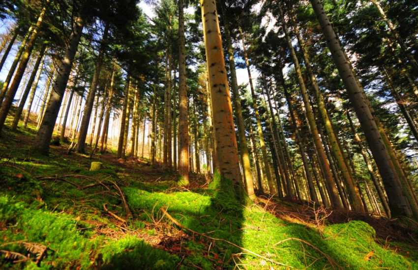 Brechfa Forest is a multi purpose site used for timber production, recreation and wildlife conservation. Don your walking boots and explore with your dog