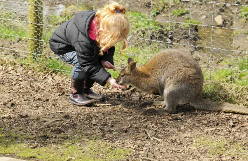 Anna Ryder Richardson's Wild Welsh Zoo great day out for all the family