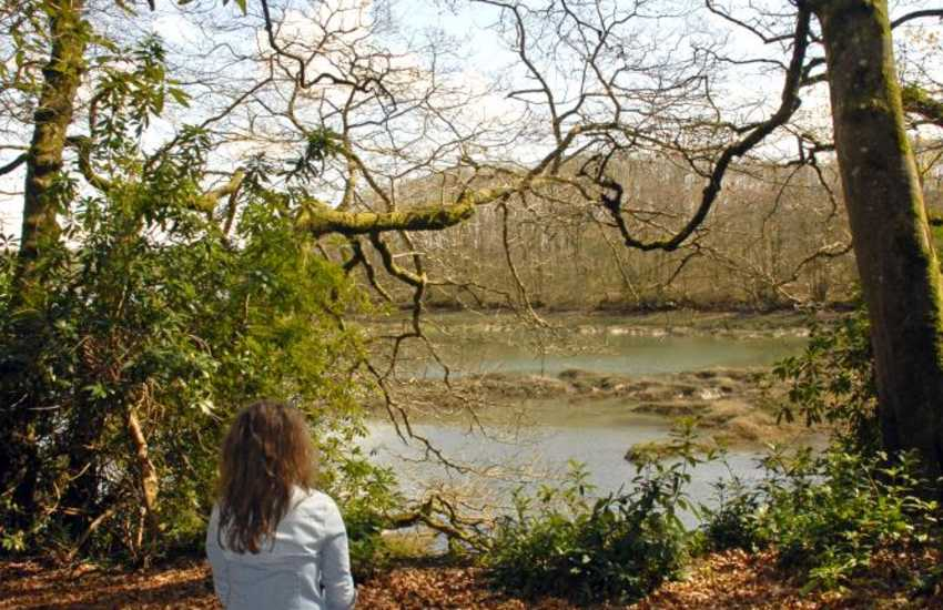 The enchanting castle grounds and nearby tidal   creek of Carew River (SSSI) are a paradise for bird watchers and nature   lovers