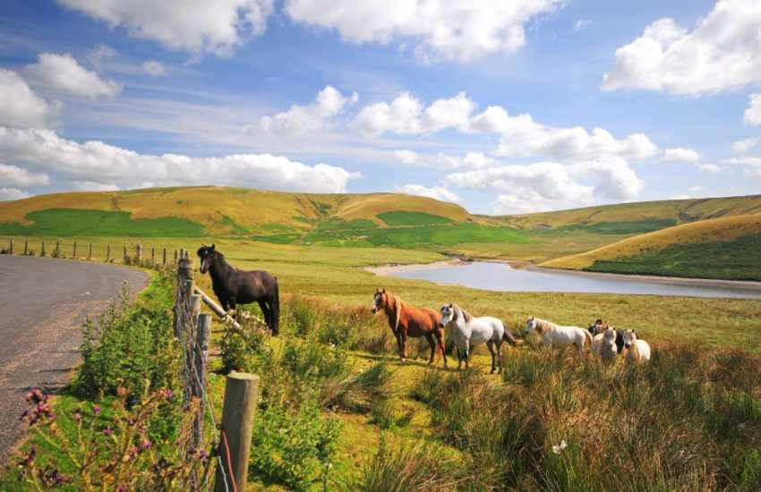 Wild and wonderful mid Wales landscapes