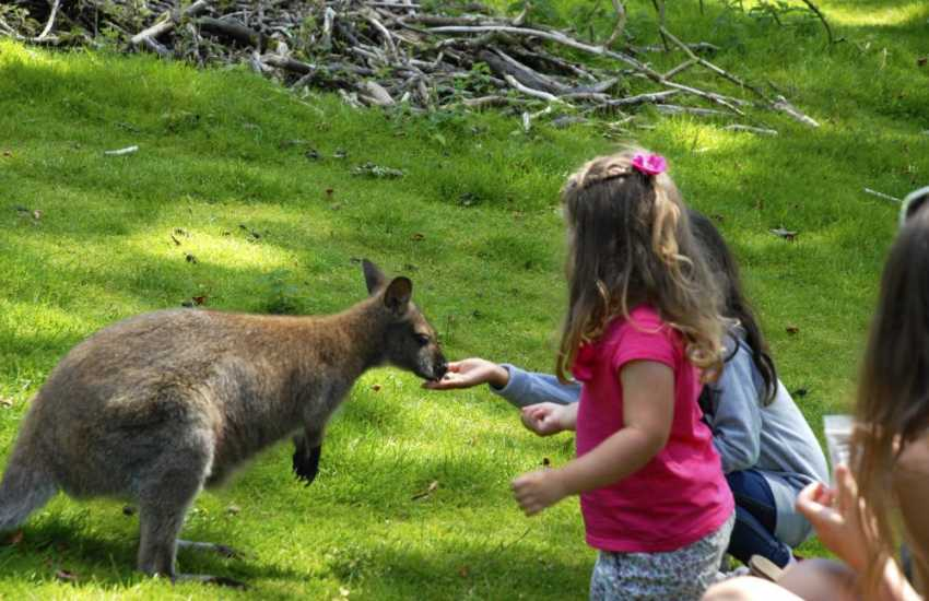 Visit Oakwood, Folly Farm, Heatherton and Anna's 'Wild Welsh Zoo' for family days out