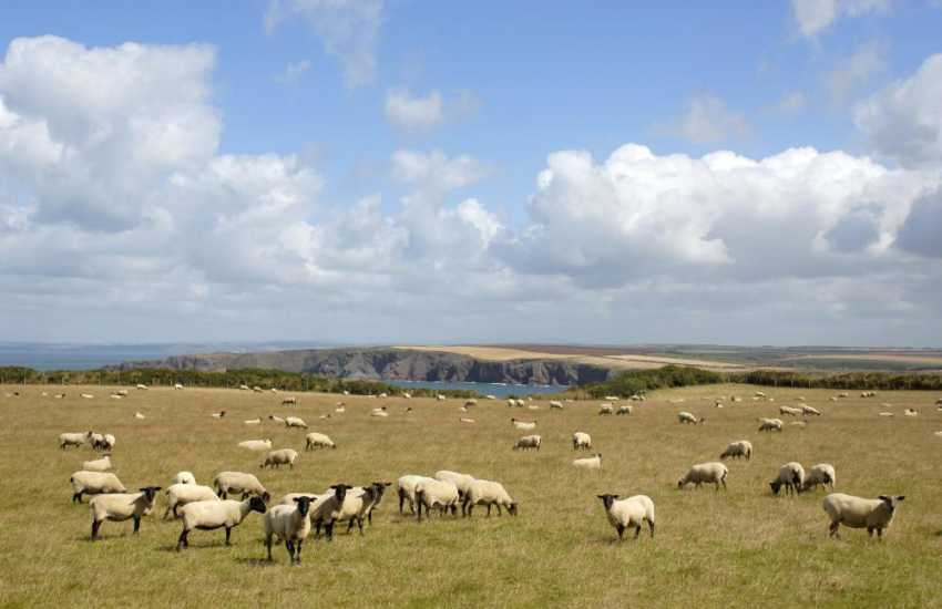 Enjoy lovely Pembrokeshire views over the surrounding countryside to the coast beyond