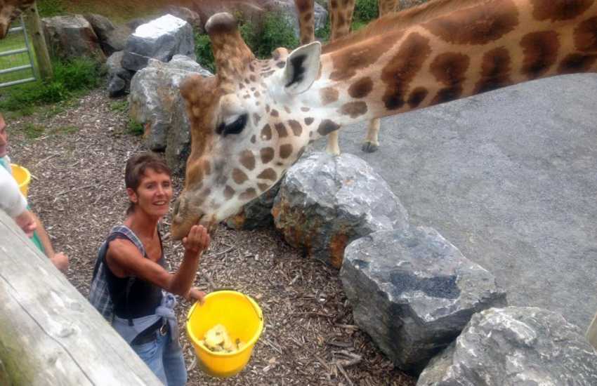 Tenby Dinosaur Park, Heatherton Activity Centre, Oakwood, Anna Ryder Richardson's Wild Welsh Zoo and Folly Farm are all great days out.