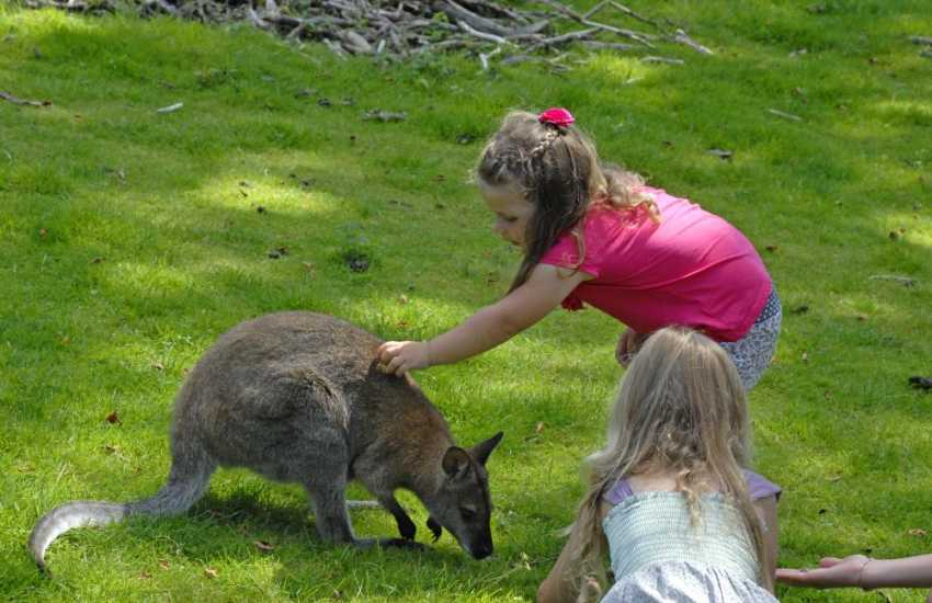 Oakwood, Heatherton Sports Park, Folly Farm or feeding the Wallabies at Anna,s Wild Welsh Zoo are all family days out within an easy drive