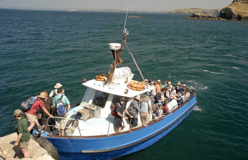 Skomer Island is reached by a short 20 minute boat trip - a real bird watchers paradise with wonderful wildlife from spring to autumn