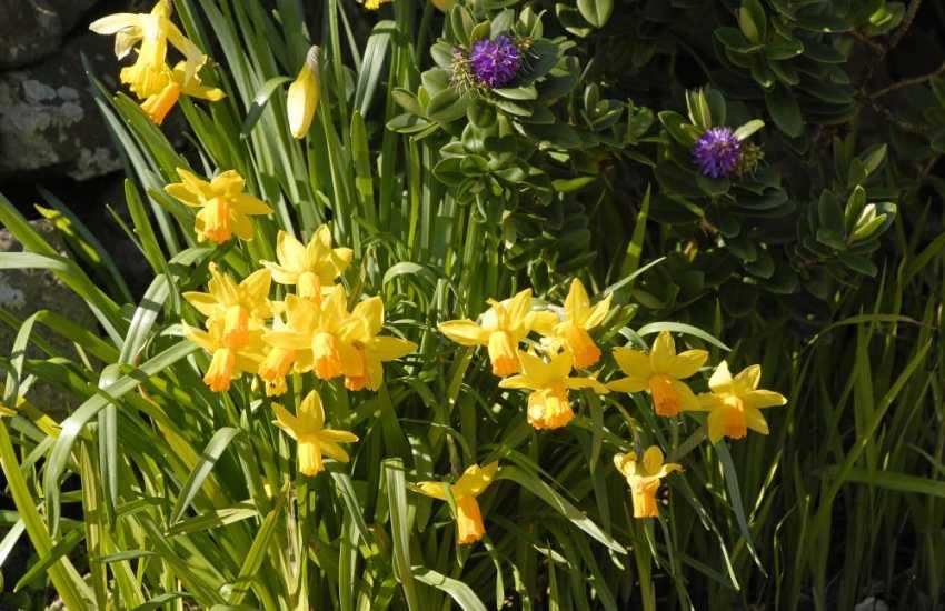 Spring at Rogerston Mount