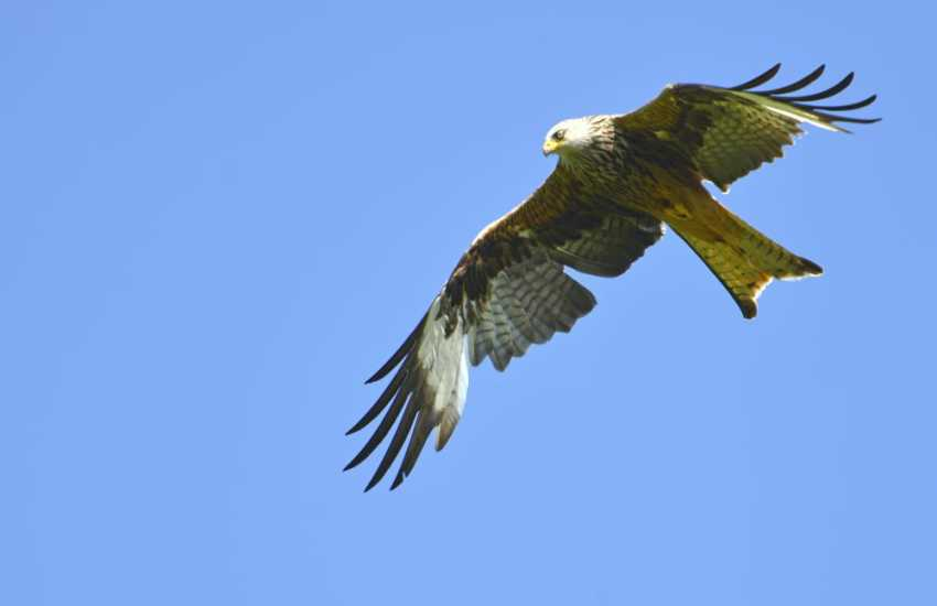 Red kites, sparrow hawks and buzzards vie for territory over head by day and by night listen to barn owls calling from Mill Woods
