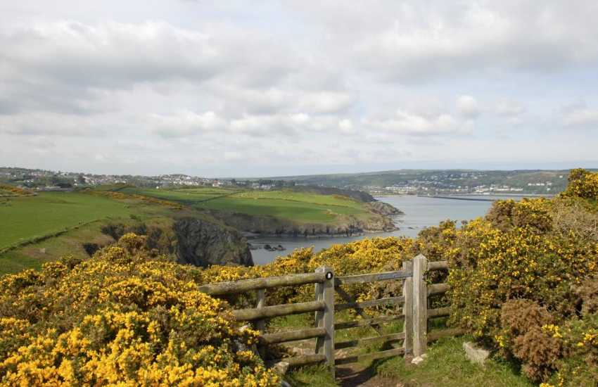 Walk The Pembrokeshire Coast Path towards Fishguard - stunning flora and fauna throughout the year