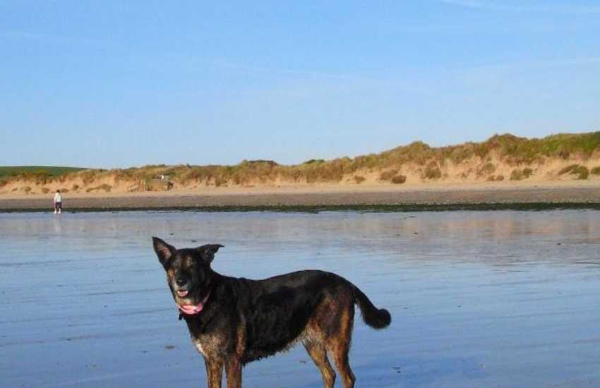 Loving the beach! Many of our cottages welcome pets