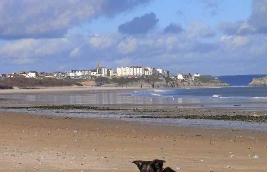 Many of our cottages welcome dogs - On South Beach, Tenby