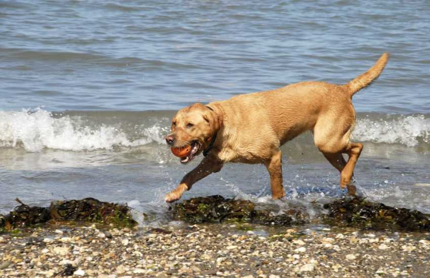 Splashing along the shore - most of our holiday cottages welcome pets