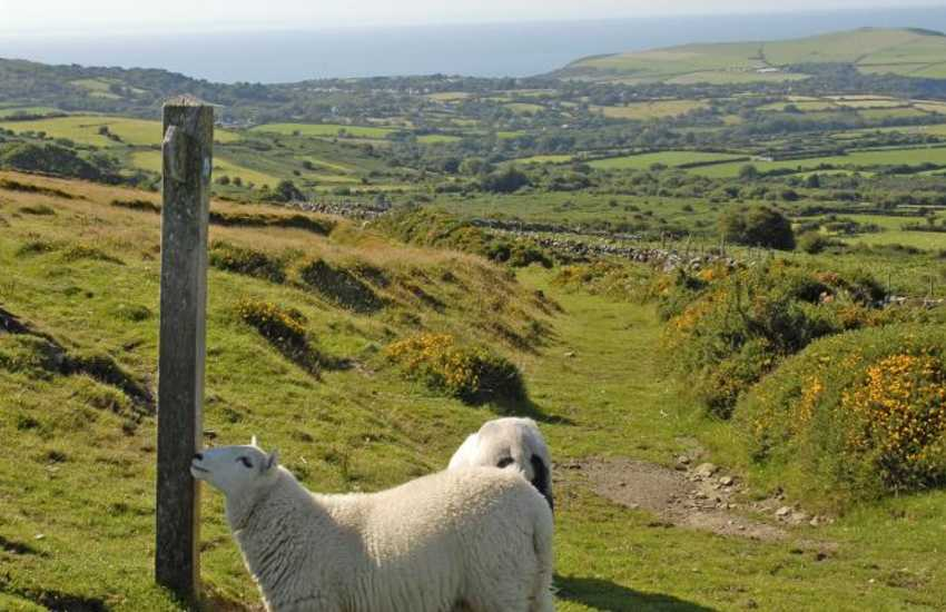 The preselli Hills - wonderful walks to be enjoyed away from the mad rush of today's modern world