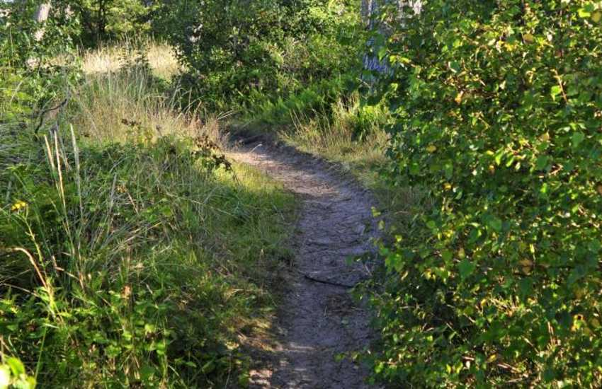 Walks through Newborough Forest Nature Reserve