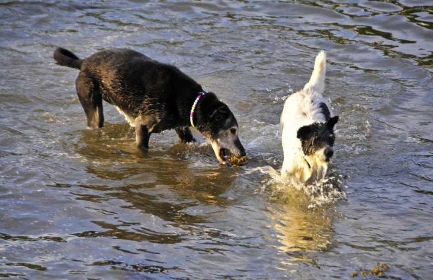 Most of Quality Cottages welcome pets. Splashing in the river