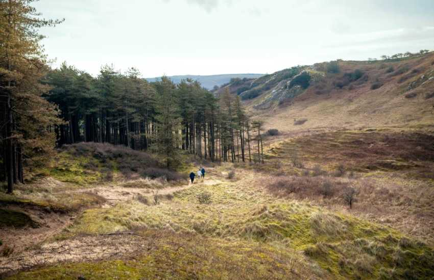 Whiteford Burrows is a dune and pine plantation, just North of Llanmadoc
