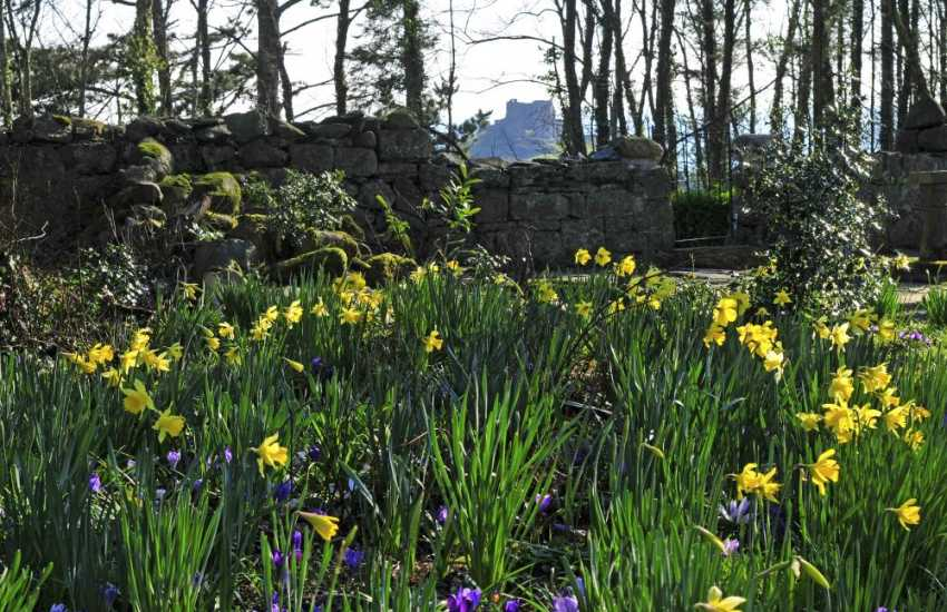 Criccieth castle views - garden