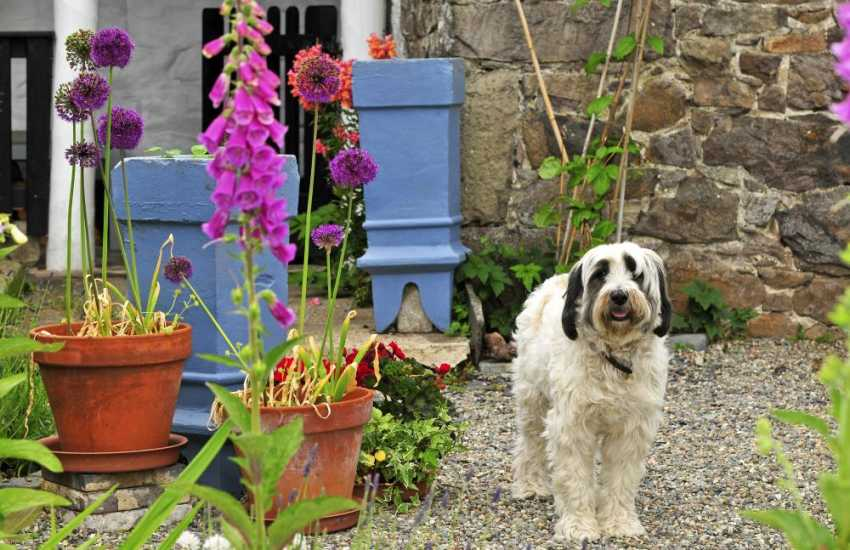 Llandwrog holiday cottage - garden